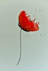 poppy4 (1 of 1)