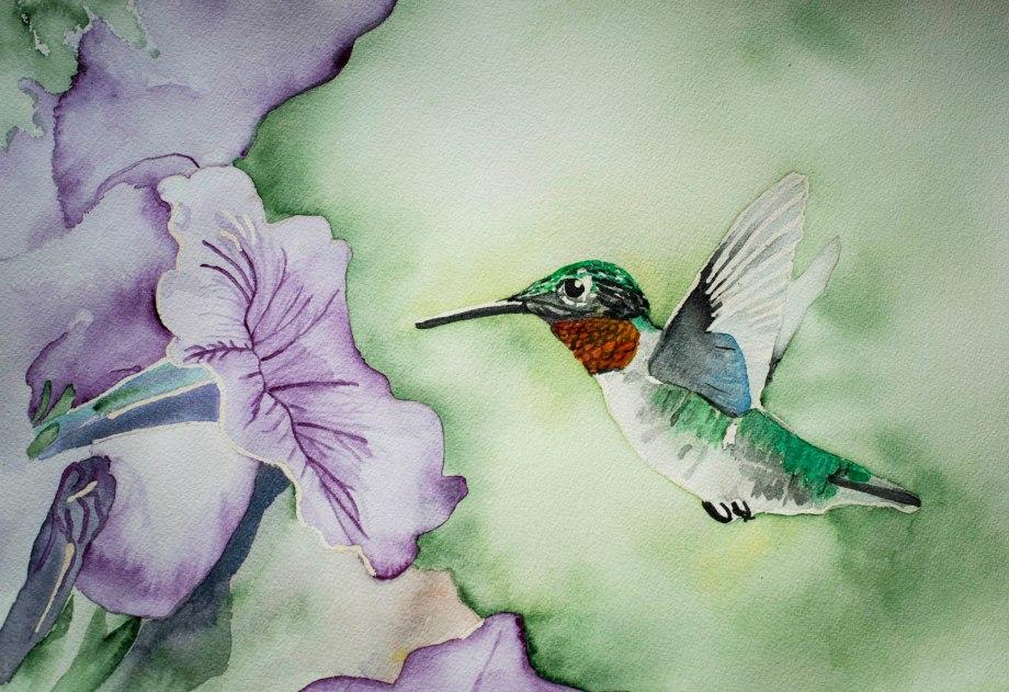 hummingbirdnumber2
