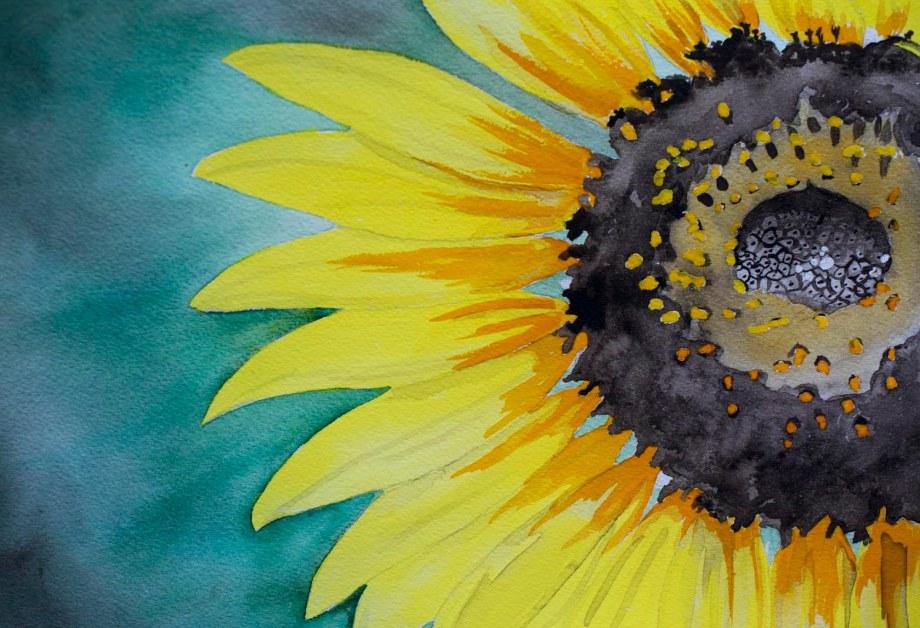 sunflowerd800